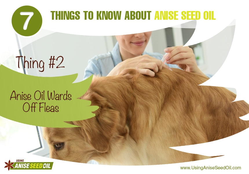 what are anise seeds used for